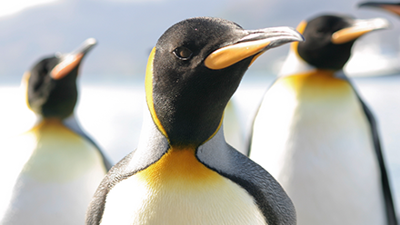 Are you prepared for Google's real time Penguin update?